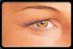 Upper eyelid illustration